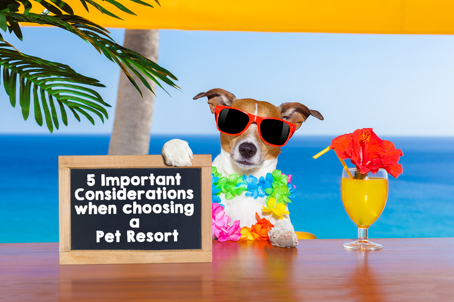 5 Important Considerations Pet Resort