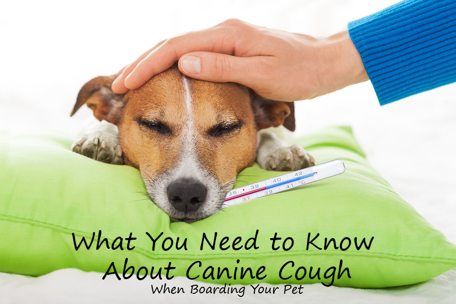 What You Need to Know about Canine Cough (Kennel Cough) When Boarding Your Pet