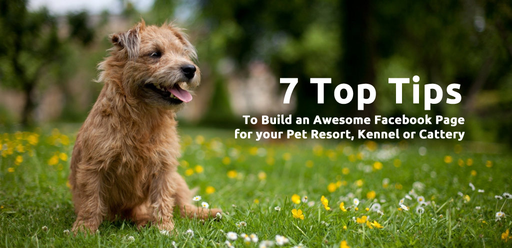 7 Top Tips to Build an Awesome Facebook Page for your Pet Resort, Kennel or Cattery